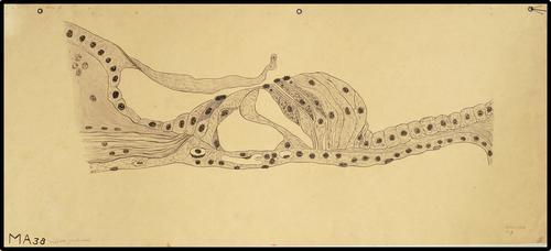 Onderwijsplaat diergeneeskunde microscopische anatomie