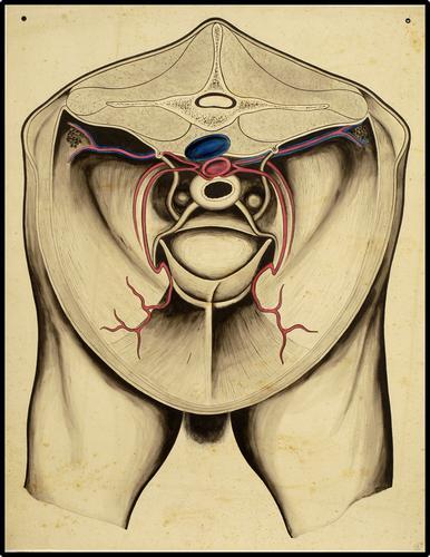 Topografische anatomie van het abdomen