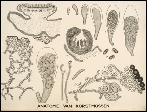 Anatomie van korstmossen
