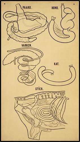 Maagdarmstelsel van verschillende diersoorten