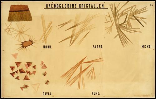 Haemoglobine kristallen
