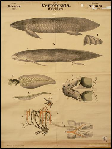 vertebrata vissen