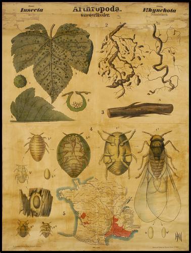 Arthropoda insekten
