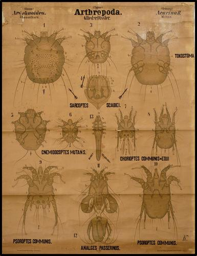 Arthropoda geleedpotigen