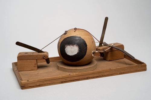 Houten model van een oogbol