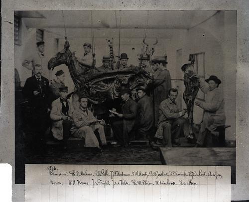 Foto van een anatomiepracticum in de snijzaal van de Veeartsenijschool