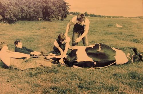 Foto vande verlossing van een koe