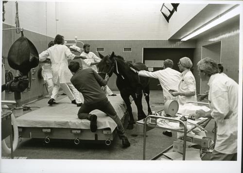 Paard in de operatiekamer