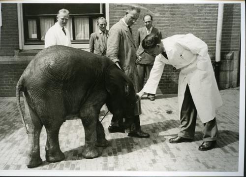 Afdeling ziektekunde bijzondere dieren