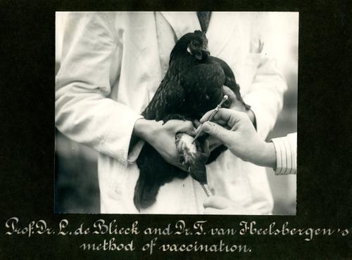 Foto van de vaccinatie van een kip