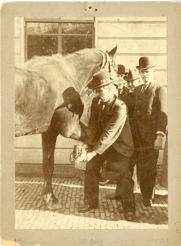 Foto van Van Horsen met paard met straalkanker