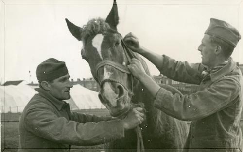 Foto van de behandeling van een paard met droes