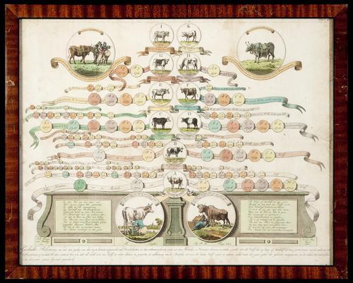 Litho waarop de afstamming van een koe en een stier staan weergegeven.