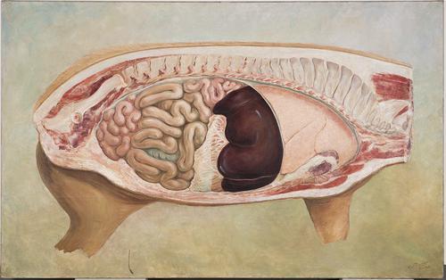 Schilderij m.b.t. de anatomie van het varken