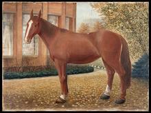 Schilderij van een paard door Douwe van der Zweep