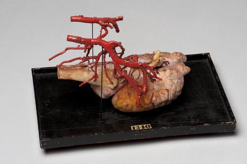 Wasmodel van hersenen