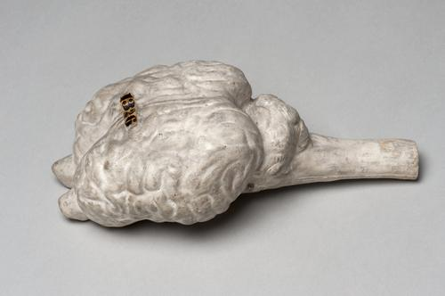 Gipsafgietsel van menselijke hersenen