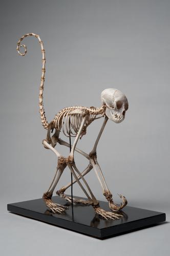 Skelet van een bosduivel