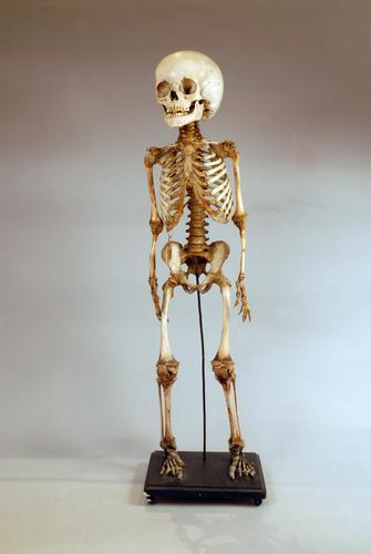 Skelet van een kind