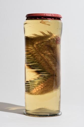 Vloeistofpreparaat van de vleugel van een ooievaar