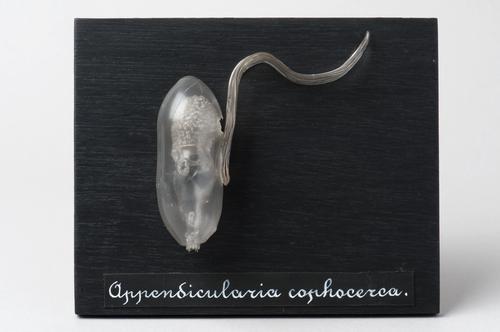 Glasmodel manteldier