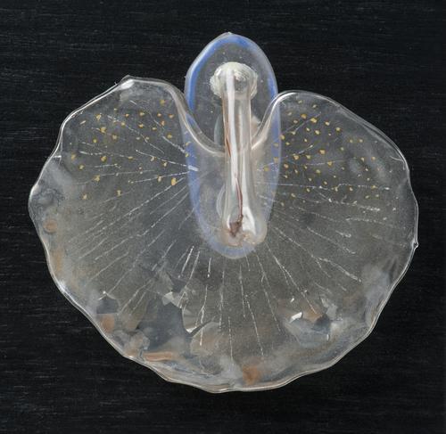 Embryonaal stadium zeeslak
