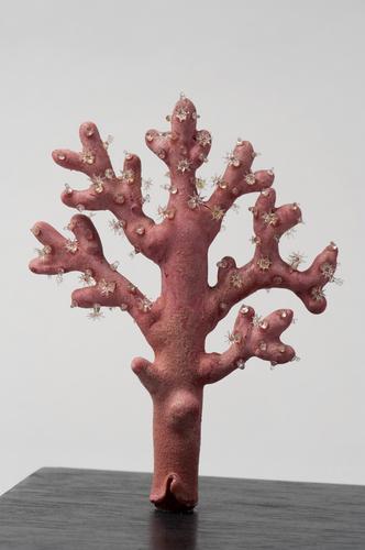Glasmodel bloedkoraal