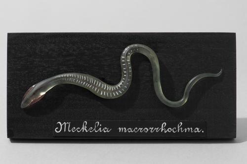 Glasmodel snoerworm