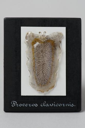 Glasmodel platworm