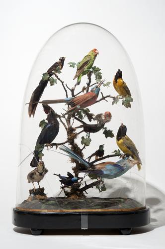 Tropische vogels onder stolp