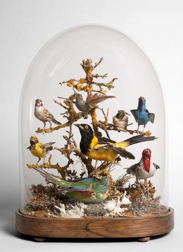 Diverse vogels onder stolp