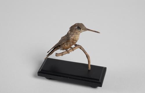 Rode kolibrie