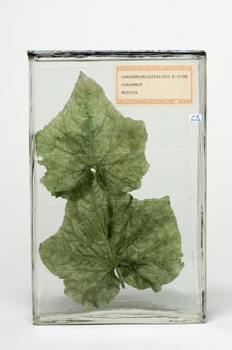 Komkommermozaïekvirus Y stam