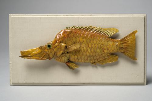 Droogpreparaat van een vis